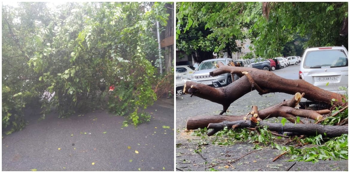Dwarka: Uprooted tree blocks road in Sector 6