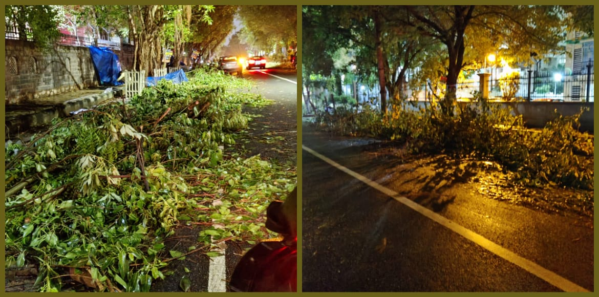 Dwarka: Trimmed branches of trees strewn on road i