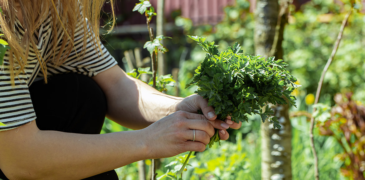Nutrition Month: Easy to grow nutrition leaves
