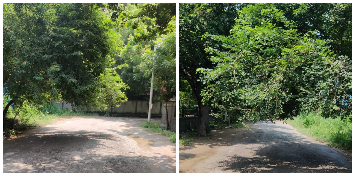 Dwarka: Sector 9 residents demand pruning of overg