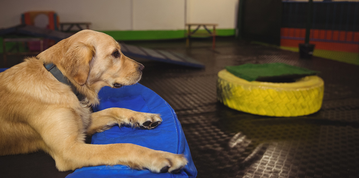Pet-friendly cafes in Delhi-NCR for you and your pet!