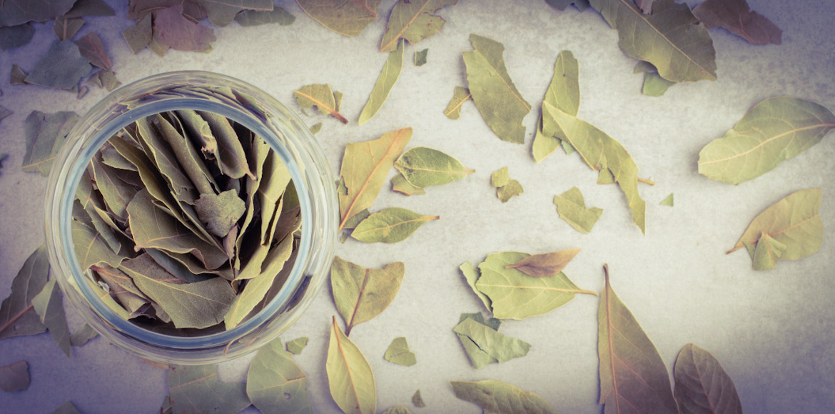 Bay Leaf- All about flavour and fragrance