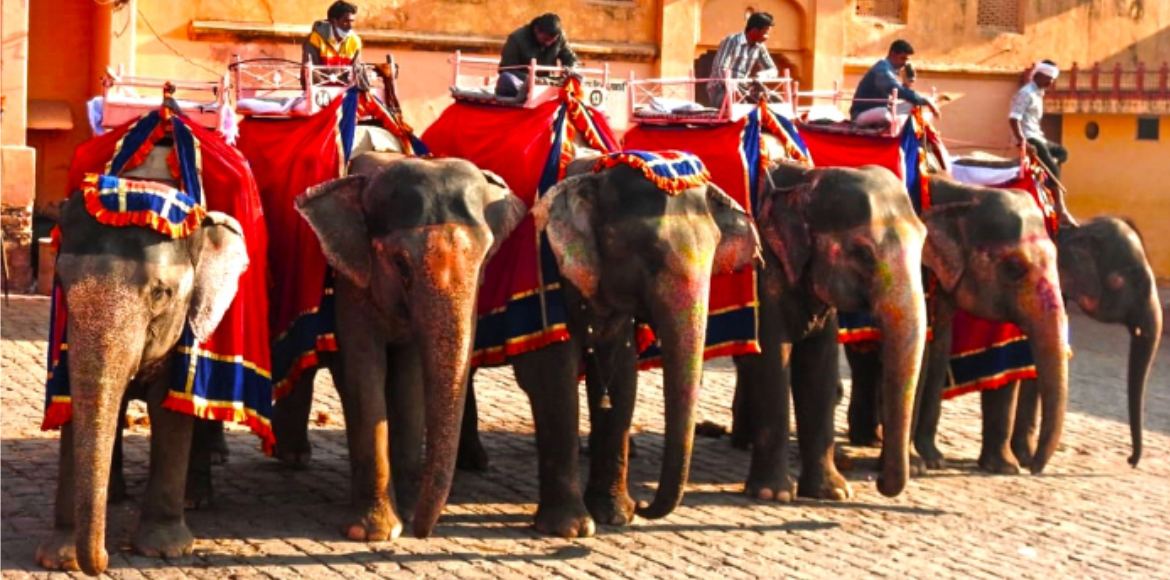 Animal protection bodies hopeful after Madras HC's directive on elephants