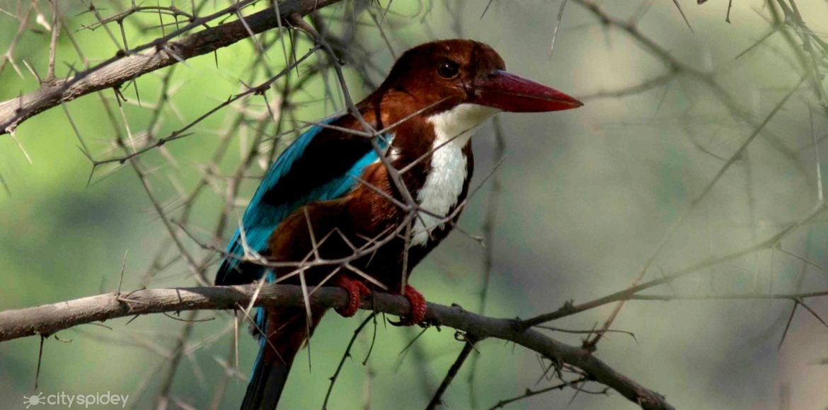 World Wildlife Day: Catch glimpses of birds in environs of Delhi